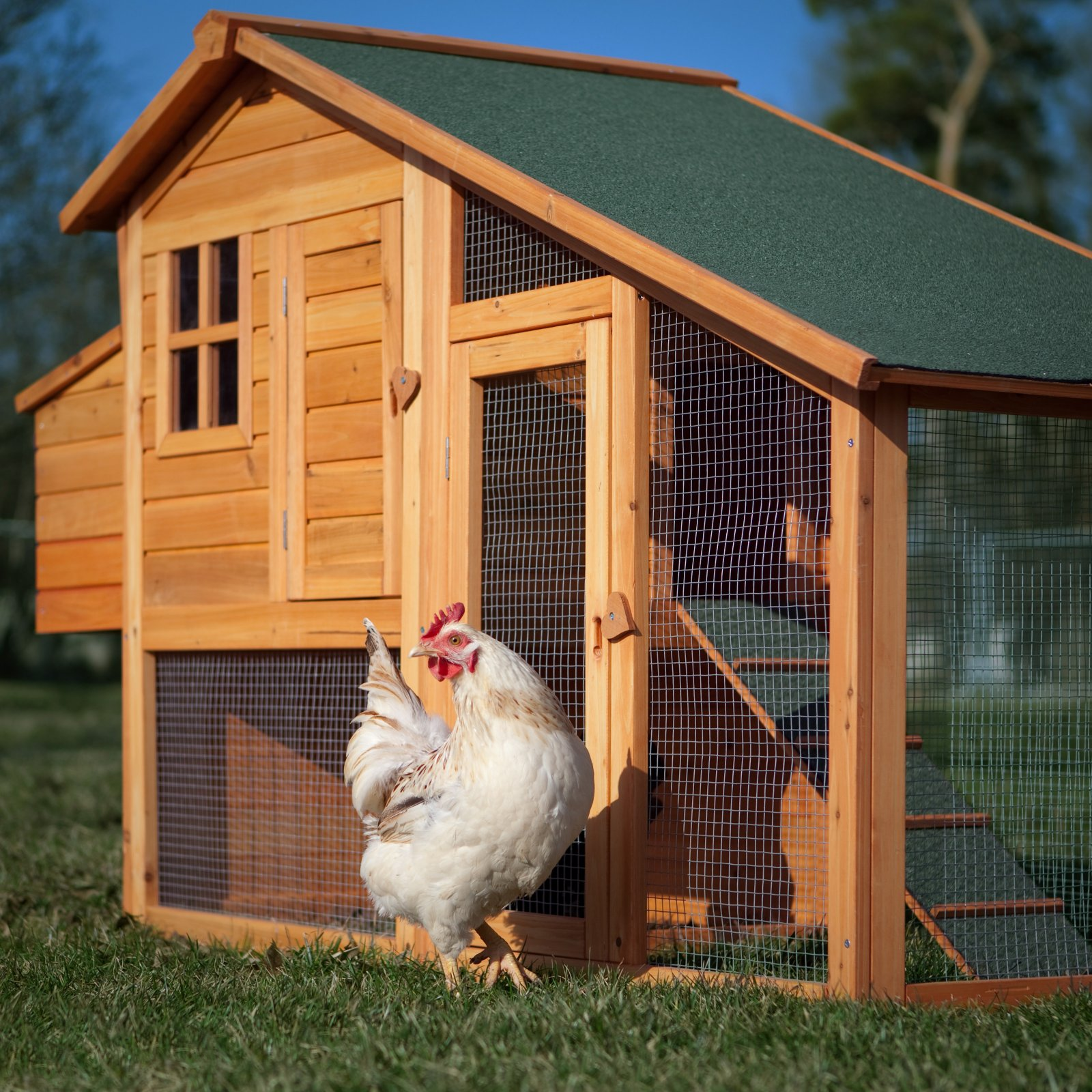 Wood work how to build a portable chicken coop plans and for Portable coop